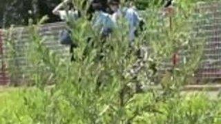 日本の十代のスカンク小便